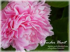 P1160645 blog header 800