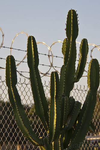 Cactus and razor wire