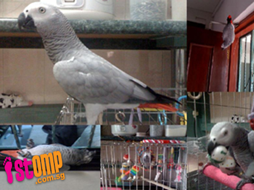 $2,000 reward for finding beloved pet parrot, no questions asked