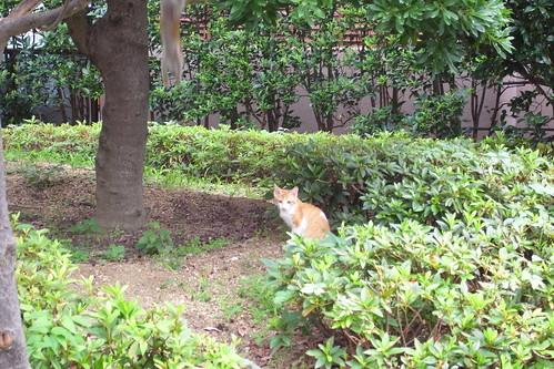 Today's Cat@2010-07-01