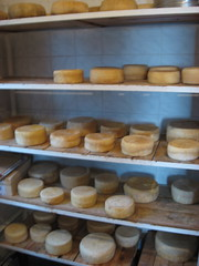 I formaggi della Masseria Senise
