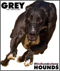 Greyhounds - Windhundzeitung.de - Foto: Helmut Dietz