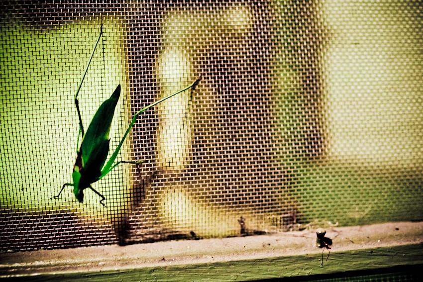 bug-o-vision-2