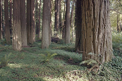 (n.states) Tags: trees trips willits