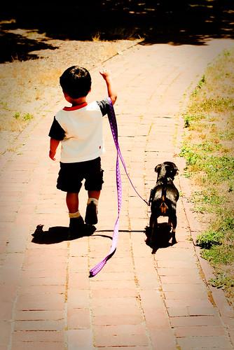 dogwalker-8