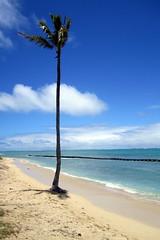 Kualoa Beach Park (wallyg) Tags: tree beach hawaii oahu kaneohebay kualoabeach kualoabeachpark honolulucounty kualoaregionalpark kneohebay