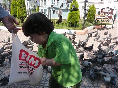 kuşlar10