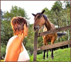 ~~French connexion...!~~ (Jolisa) Tags: horse nature caballo cheval pferd amiti galope plantecheval