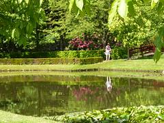 Double vision (Cathpetsch) Tags: flowers trees plants nature water netherlands reflections garden bomen nederland natuur arboretum tuin planten bloemen oudenbosch panasonicdmctz6