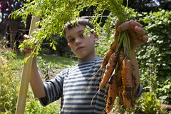 boy holding bunch carrots