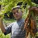 boy holding bunch carrots