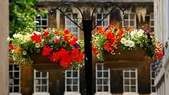 326-43L (Lozarithm) Tags: flowers bath cityscape k100d 55300 smcpda55300mmf458ed pentaxzoom