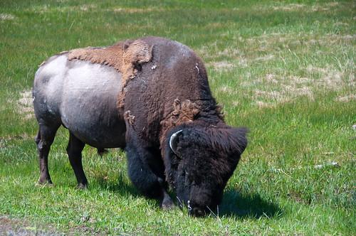 Yellowstone 05