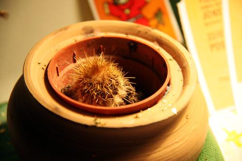 cactus orphan!