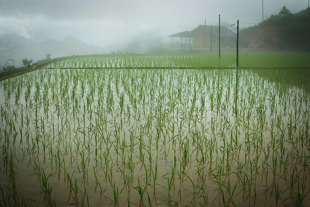 The World S Best Photos Of Agricultura And Arrozales
