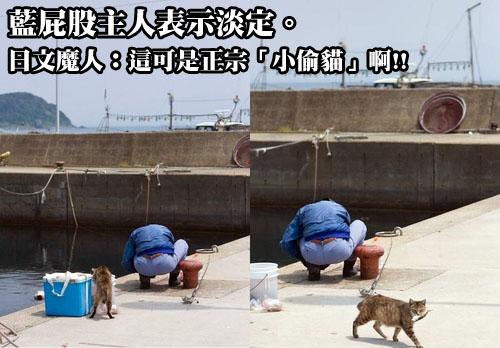 小偷貓!!!