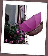 Pretty in Pink (I love beachhuts) Tags: pink flowers lake france umbrella polaroid switzerland medieval boutique lakegeneva pelargonium laclman yvoire