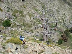 Descente sur Puscaghja après Bocca di Caprunale (photo Sylvain Guillaumon)