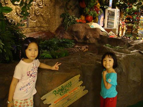 Rainforest Cafe外面的鱷魚池