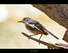 On a Launch Pad... (Vijay..) Tags: vijay bird nature closeup canon zoom bokeh telephoto handheld launchpad xsi nagpur 70300 450d phulwadhawa isworks