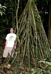 Me in the Amazon Forest (cowyeow) Tags: trees tree peru southamerica strange forest weird amazon rainforest roots jungle loreto peruvian madreselva amazonriver