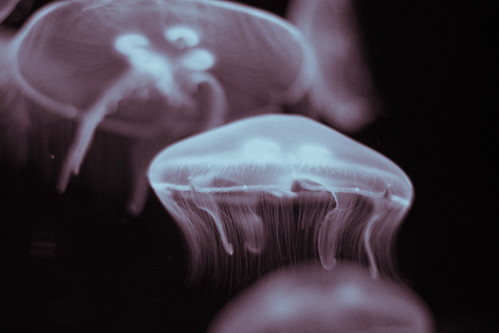Stay calm like a jelly fish.