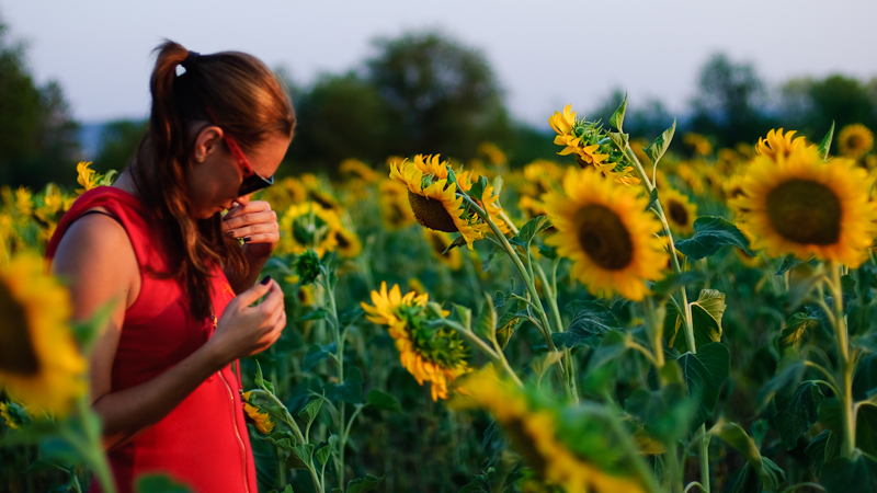 In the sunflower field #4