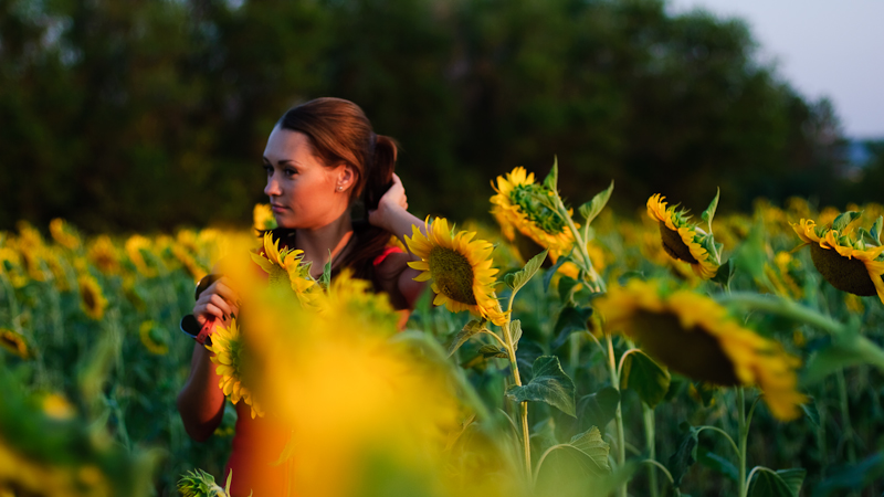 In the sunflower field #5