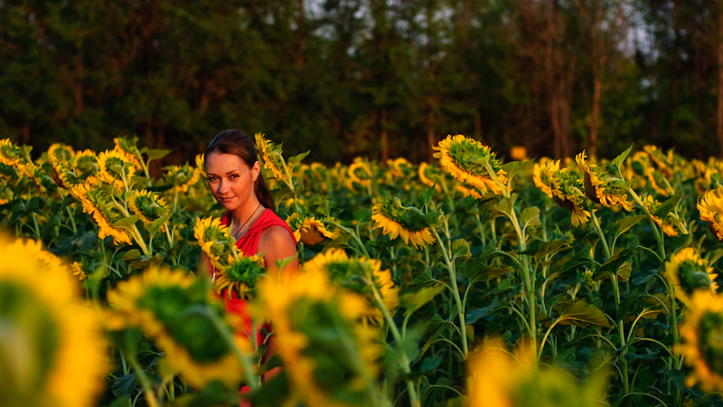 In the sunflower field #2