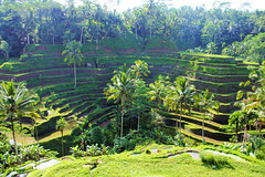 Bali Rice Terrace III (cwgoodroe) Tags: new old school summer bali sun stone kids children indonesia rice statues agriculture mountians patties riceterraces ubud seminyak batubulan