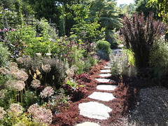 Purple Border with Path