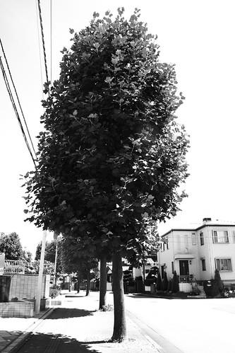 町田樹 画像22