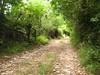 sentiero che va giù presso via degli olmi