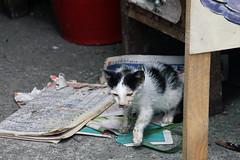 IMG_0519 (翔志) Tags: taiwan taipei 台灣 台北 貓 taipeicounty 台北縣 侯硐 houtong 猴硐 瑞芳鎮 貓村 catvillage rueifangtownship houtongcatstreet 百貓街