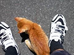神島で出会ったネコちゃん #3