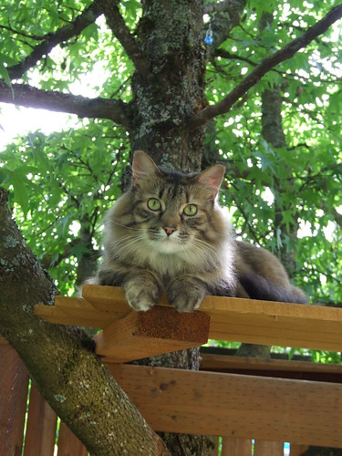 cat in the treehouse