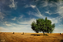 Solo con le balle.... (gred.) Tags: tree nature landscape surreal fields aporia thesecretlifeoftrees