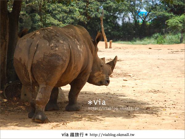 【關西六福莊】精彩秘探野生動物園/DIY手作/農趣樂~!28