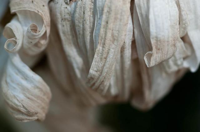 20100810_memorial_flowers_6903