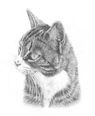 Meredith Tabby Cat (tiberiopencilart) Tags: blackandwhite pets art nature animals closeup cat kitten kitty whiskers archival reproduction pencilandpaper cateye wallportrait animalsketch highlydetailed realisticdrawing