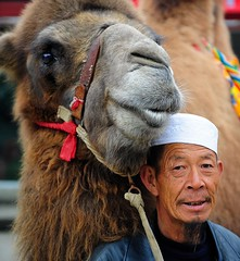 The Moslem and his Bactrian Camel (reurinkjan) Tags: muslim moslem bactriancamel moorman mussulman camelusbactrianus  janreurink amdo tibetanplateaubtogang 2009 tibet maowencounty