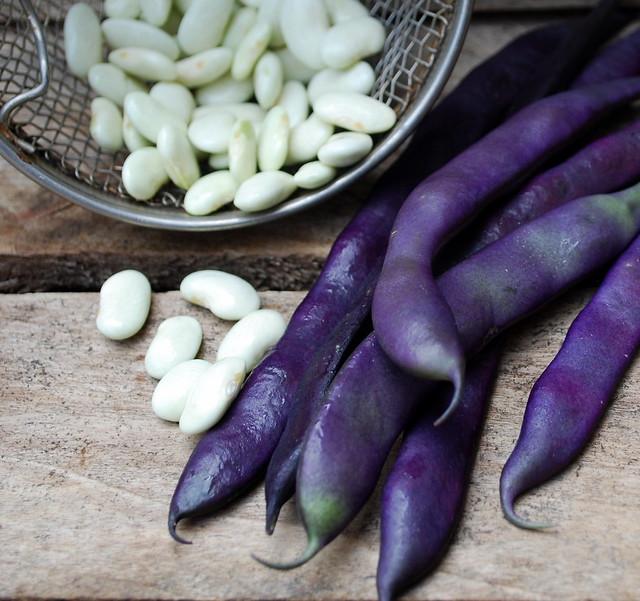 Purple beans 3