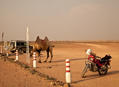 Park Your Camel Please! (Irena Portfolio) Tags: mongolia gobiexcursion