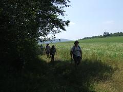A mezős rész végén
