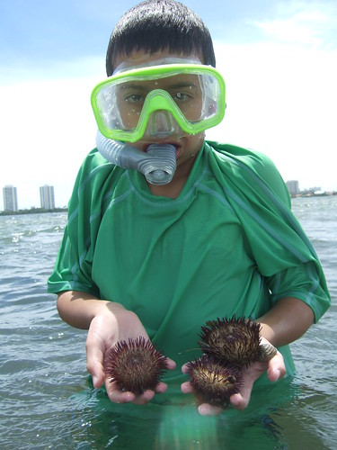 Ethan with Sea Urchins