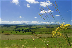 Les Monts du Cantal (TeF46) Tags: france auvergne cantal cezallier