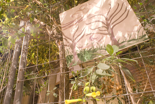 plantas en casa garach
