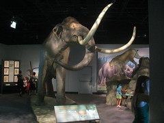 Columbian Mammoth by edenpictures