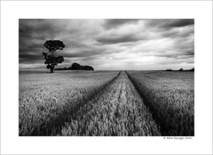 Lone Oak Tree (Mike. Spriggs) Tags: tree field landscape oak farm rugeley bowerlane exif000