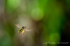 Yellow & DOF (zohaaa) Tags: city trip travel family vacation holiday macro art nature bug insect fly nikon europe dslr 55200 d90 flickraward flickraward5